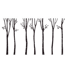 birch tree silhouette background vector image