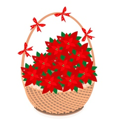 Brown Basket of Red Christmas Poinsettia Flower vector