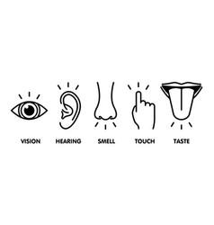 Icon set five human senses vision - eye smell vector