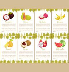 Passion fruit and papaya watermelon set vector