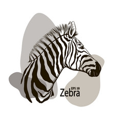 zebra beautiful animal pattern vector image