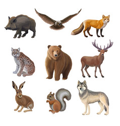 cartoon forest animals set vector image vector image