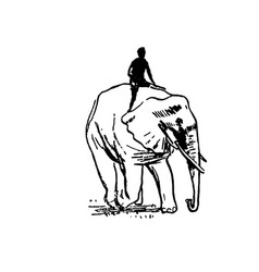 hand drawn sketch of elephant black on vector image
