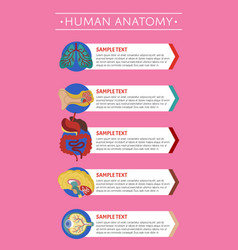 Human anatomy medical poster with internal organs vector