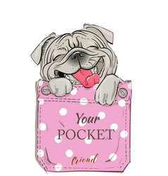 little pug in pocket vector image