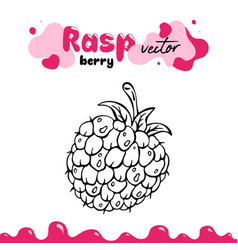 Raspberry berry clipart vector