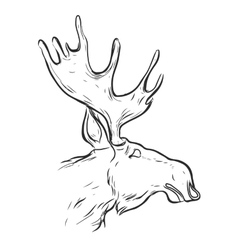 Hand drawn graphic moose vector image vector image