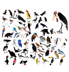 Collection of images of birds vector