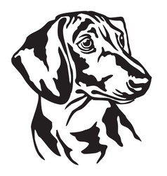 Decorative portrait of dog dachshund vector
