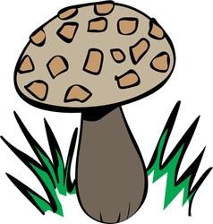 Growing Mushroom vector image