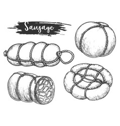 set isolated sausage and meat roulade vector image