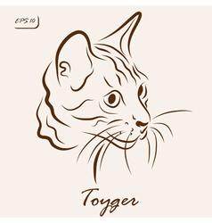 Toyger cat vector