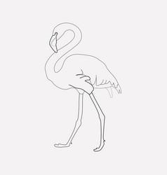 Flamingo icon line element of vector