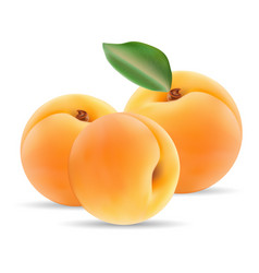 Group of ripe apricot with leaves isolated on a vector