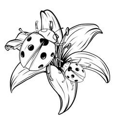 ladybird set three ladybirds vector image