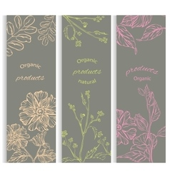 Set floral flowering decorative brochures vector