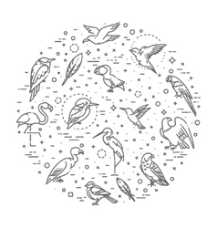 Set of different birds vector image