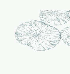 water drops on lotus leaf sketch vector image