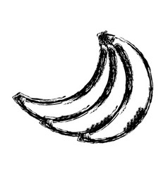 contour babanas fruit icon stock vector image vector image
