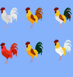 Rooster Cock set of bird different color vector image
