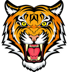 tiger anger vector image