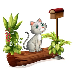 A cat above a trunk near the wooden mailbox vector