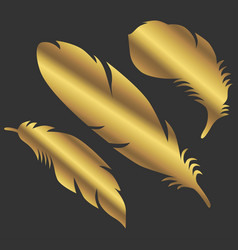 art golden color feathers sign object symbol vector image