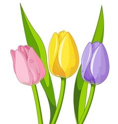 Bouquet tulips vector