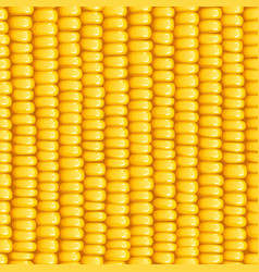 corn cob organic food vector image