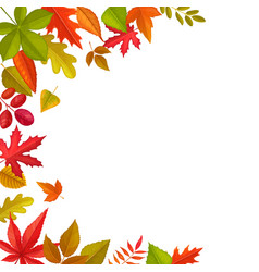 Frame fallen leaves autumn foliage border vector