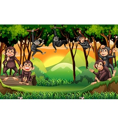 Monkeys climbing tree in the jungle vector image
