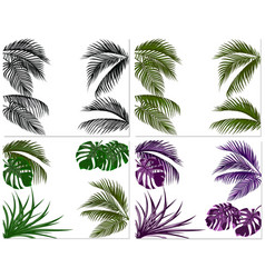 sets of colorful leaves of tropical palm trees vector image