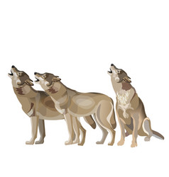 Wolf pack howling vector