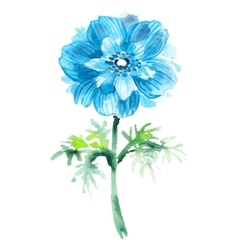 Cyanic watercolor anemone beautiful flower vector