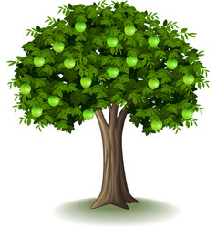 green apple on apple tree vector image