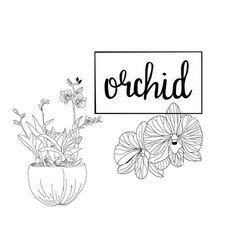 hand drawn sketch orchid flowers in graphic style vector image