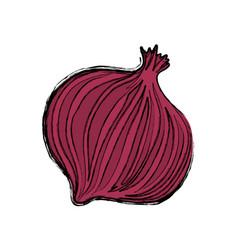 onion purple vegetable vector image