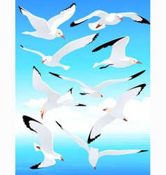 Sea gull set vector