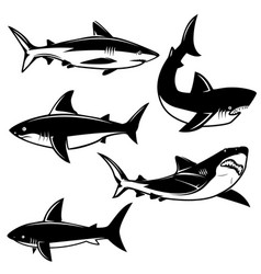 set of shark on white background design element vector image