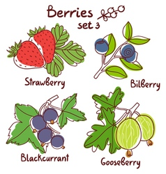 Berries set 3 vector image vector image