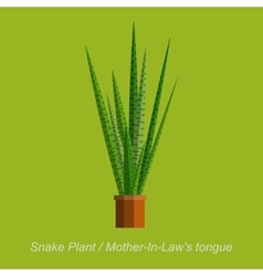flat of indoor homeplant Snake vector image
