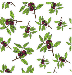 branch with berries and green leaves on white vector image