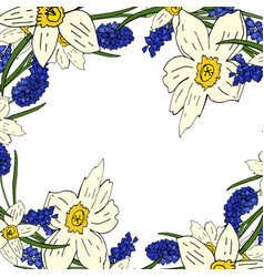 flower background of daffodils and mouse hyacinth vector image