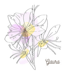 Pink beautiful gaura on white background vector