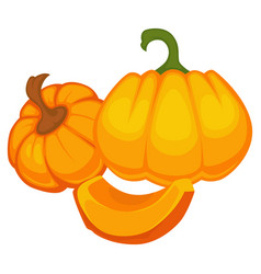 pumpkin pieces and slices whole organic vegetable vector image