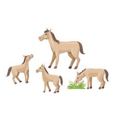 Set foals and horse farm animals walk and vector