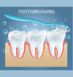toothbrushing medical anatomy poster design vector image