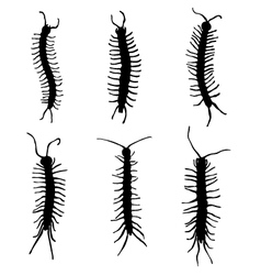millipedes vector image vector image
