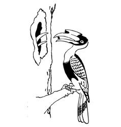 Bird hornbill vector