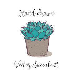 decoration colorful succulent polyphilla in a vector image